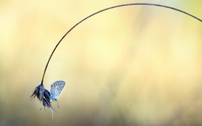 Picture grass, nature, butterfly