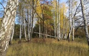Picture landscape, forest, autumn