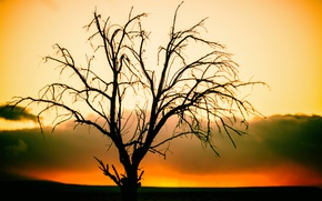 Picture sunset, tree, silhouette