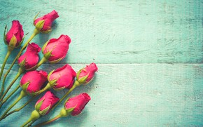 Picture flowers, roses, pink, buds, fresh, wood, pink, flowers, beautiful, spring, roses