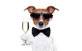 Picture butterfly, glass, humor, glasses, white background, champagne, gentleman, dog, Jack Russell Terrier