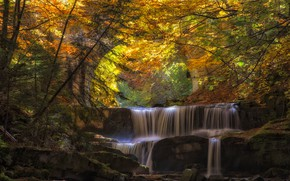 Picture autumn, forest, leaves, water, bridge, river, cascade