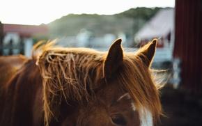 Wallpaper hair, horse, mane