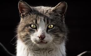 Picture Cat, dark, cat, kitty, homeless, homeless