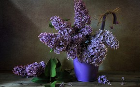 Picture bouquet, lilac, inflorescence