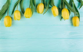 Picture flowers, Spring, Tulips, Background, flowers, Spring, Background, Tulips