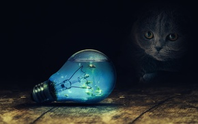Picture cat, light bulb, fish, surrealism, retouching, by FantasyArt0102