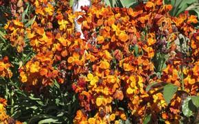 Picture flowers, Bush, brown, April, spring 2018, Meduzanol ©