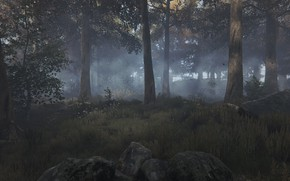 Picture forest, fog, rendering, nature ., fog in the forest, Ethan Carter