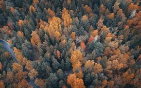 Wallpaper river, autumn, forest