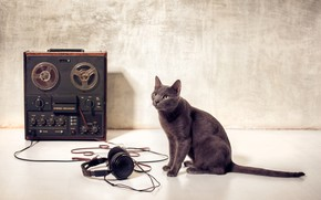 Wallpaper cat, paws, Meloman, wallpaper., bokeh, reel, green eyes, reel, tape, film headphones, Tomcat, breed Russian ...