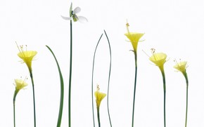 Picture nature, spring, petals, stem