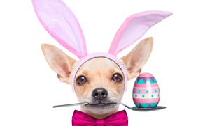 Wallpaper egg, spoon, ears, bow, bow, Easter, Easter, holidays, dogs, Chihuahua, dog