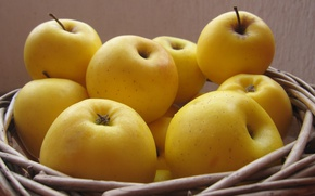Picture yellow, Apples, basket
