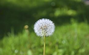 Picture flower, macro, dandelion, minimalism, symmetry