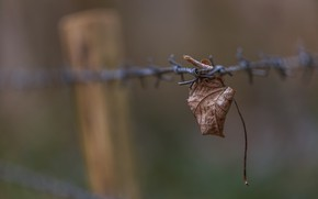 Picture background, leaf, barbed wire