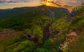 Picture forest, sunset, mountains, snag, Russia, Crimea, The Crimean mountains