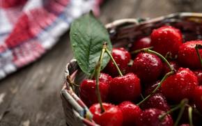 Picture cherry, berries, tree, fresh, wood, basket, cherries, Sweet