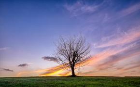 Picture field, tree, horizon