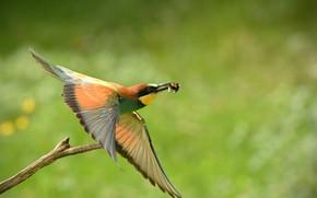 Picture Bird, Flight, Branch, Mining