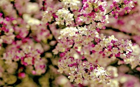 Picture branches, spring, flowering
