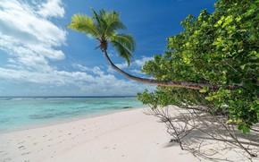 Picture beach, tropics, the ocean