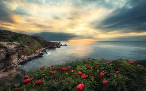 Picture sea, the sky, clouds, sunset, flowers, stones, rocks, coast, horizon, peonies, Bulgaria