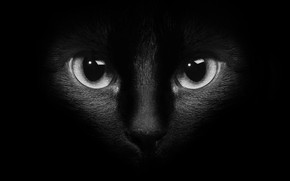 Picture cat, eyes, cat, black background, black cat, black and white photo