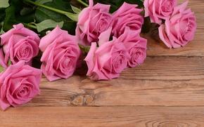 Wallpaper background, roses, Board, flowers