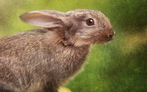 Picture look, treatment, face, fur, cute, muzzle, close-up, portrait, green, grey, background, hare, rodents, Bunny, ears, …