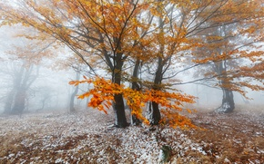 Picture winter, autumn, forest, snow, trees, nature, foliage