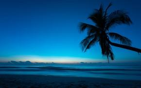 Wallpaper sea, beach, summer, night, tropics, Palma, Nature