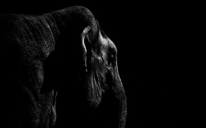 Picture light, elephant, shadow