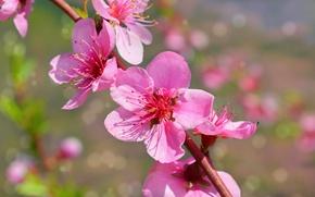 Picture macro, branch, Spring, flowers, Spring, Flowering, Macro, Flowering