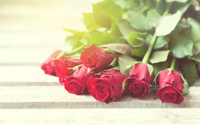 Wallpaper red roses, buds, valentine`s day, love, roses, romantic, roses, red, flowers