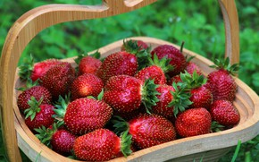 Picture summer, nature, berries, beauty, strawberry, vitamins, delicious, cottage