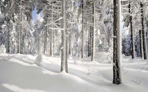 Wallpaper snow, forest, winter