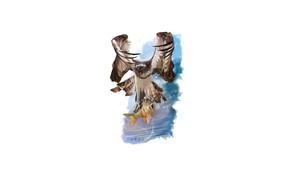 Picture bird, eagle, fish, predator