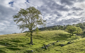 Picture Nature, Clouds, Meadows, Trees, Stones, UK, Yorkshire