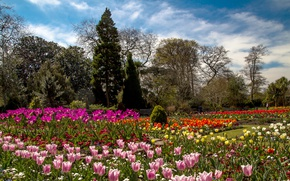 Picture trees, flowers, garden, tulips, UK, colorful, Wales, Botanic Gardens, Swansea