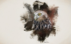 Picture eyes, background, owl, bird