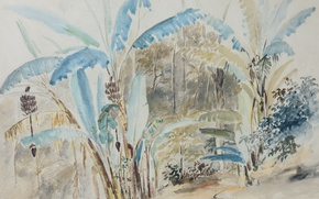 Picture leaves, nature, figure, watercolor, Bananas, Camille Pissarro