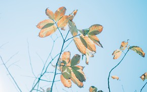 Picture leaves, light, branches