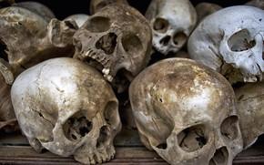 Picture sake, human, bones