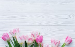 Picture flowers, tulips, pink, fresh, wood, pink, flowers, beautiful, tulips, spring
