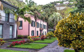 Picture mountains, palm trees, lawn, Portugal, mansion, street, houses, Portugal, Madeira, Brava