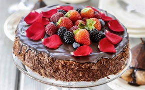 Picture berries, chocolate, petals, cake