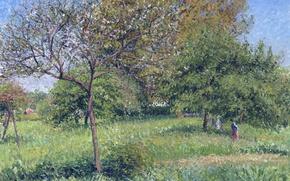 Picture trees, landscape, nature, picture, garden, Camille Pissarro, Walnut Morning in Eragny