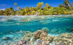 Picture sea, water, tropics, palm trees, the bottom