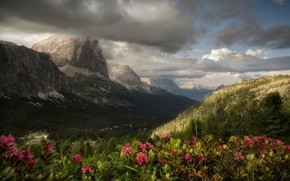 Picture clouds, flowers, mountains, forest